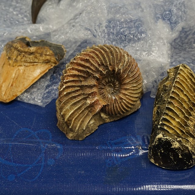 What cool ammonite fossils!
